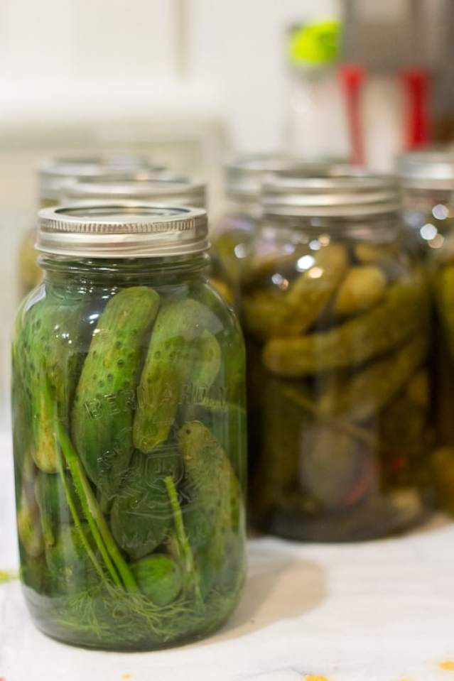 Spicy garlic dill pickles 10
