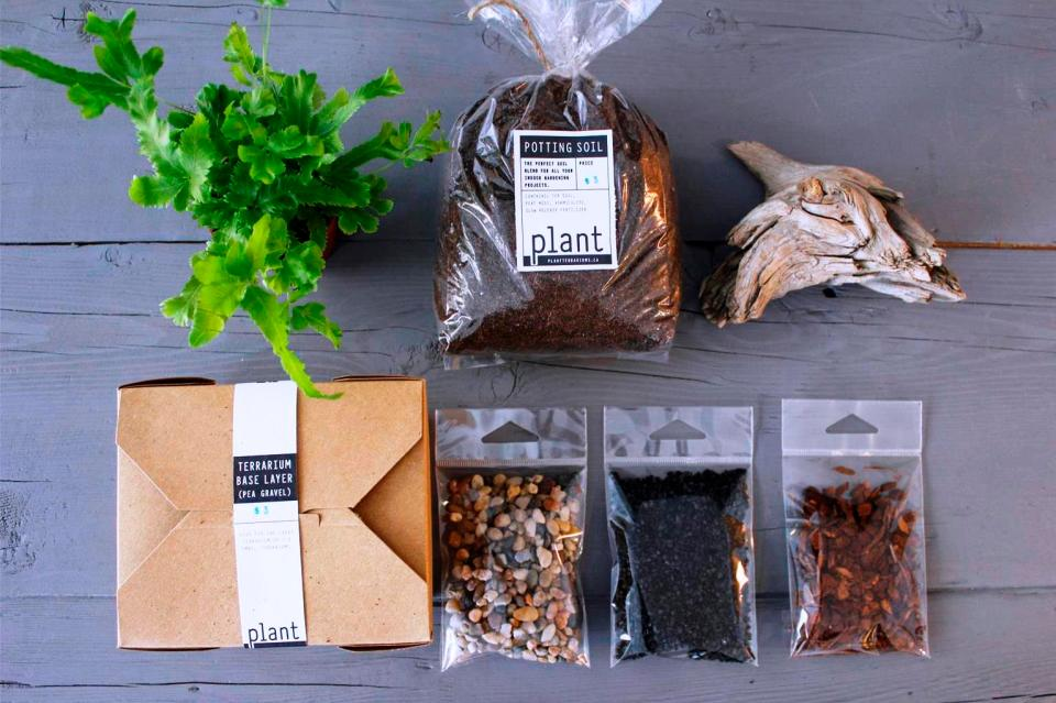 Plant terrarium Calgary MrFab (5)