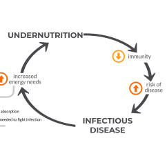 Diagram Of How Vaccines Work Allen Bradley Wiring Diagrams Undernutrition And Infectious Disease Voice