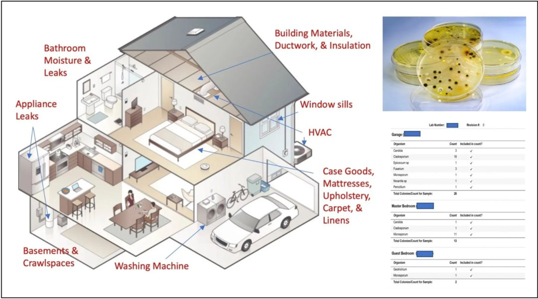Investigating Mold In Your Home