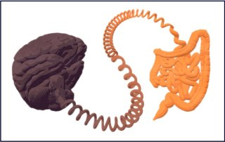 La communication cerveau intestin