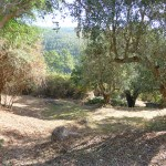 Monchique Real Estate plot with ruin for sale