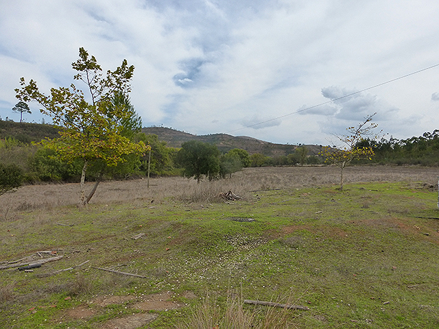 Monchique Real Estate terrain for sale
