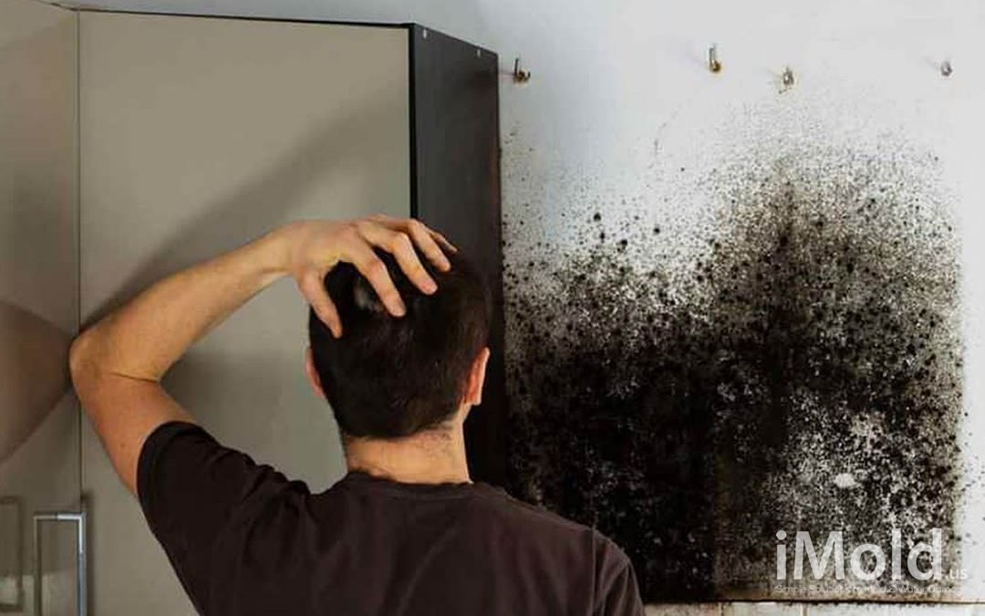 3 Signs You Need Mold Remediation in Bonita Springs, FL