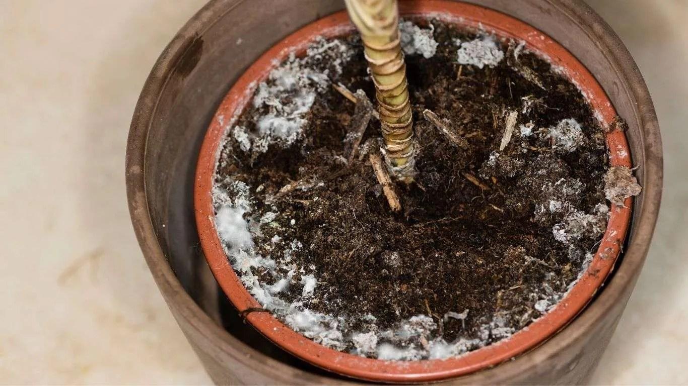 Plant Mold