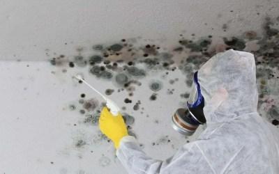 3 Ways To Identify Black Mold