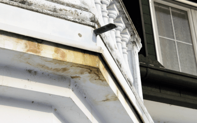 Are you Buying a House with Mold?