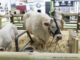La Charolaise Ideale égérie du 57ème Salon de l'agriculture.