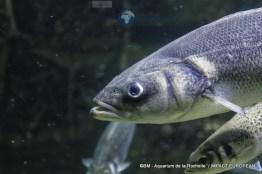 aquarium la rochelle 14