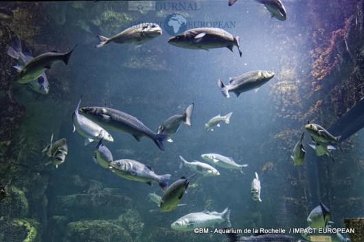 aquarium la rochelle 20