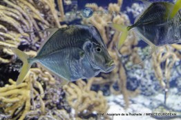 aquarium la rochelle 29