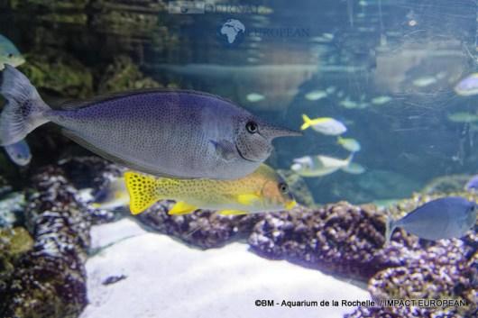 aquarium la rochelle 31