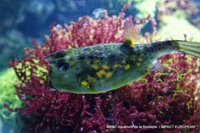 aquarium la rochelle 44