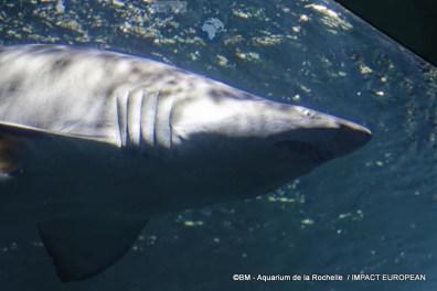 aquarium la rochelle 54