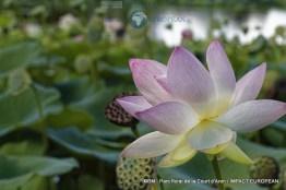 parc floral de la court d'aron 18
