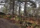 Randonnée en « Forêt de Fontainebleau » une Forêt d'exception