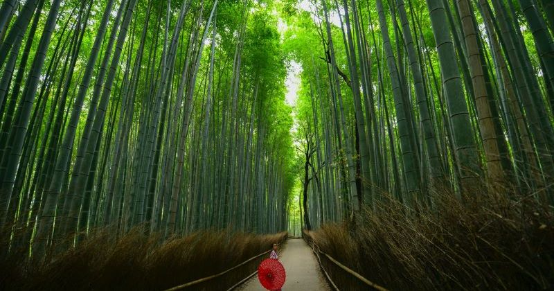A woman standing in a bamboo forest in Kyoto Japan.