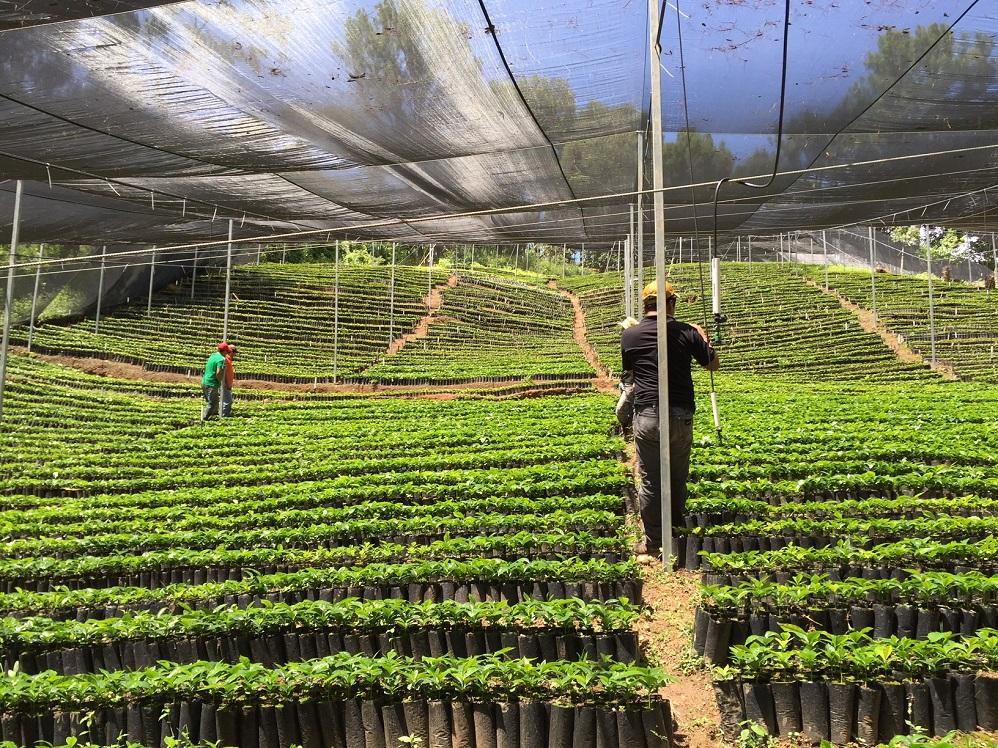 El vivero de impacto caf superamos la fase inicial y for Viveros en paine