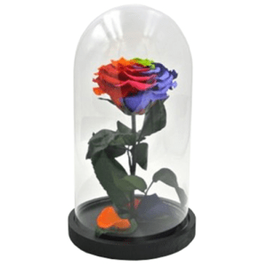 Teca in vetro con rosa rainbow 24cm