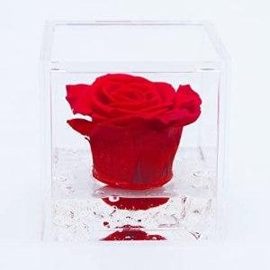 FlowerCube con rosa rosso