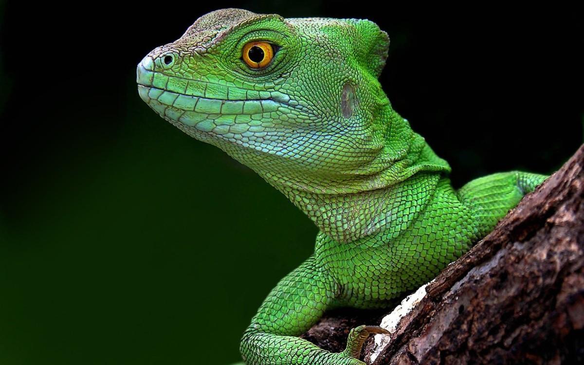 Fight Your Lizard Brain
