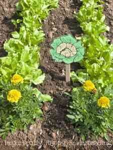 Marigolds in the Vegetable Garden Important Things They Do