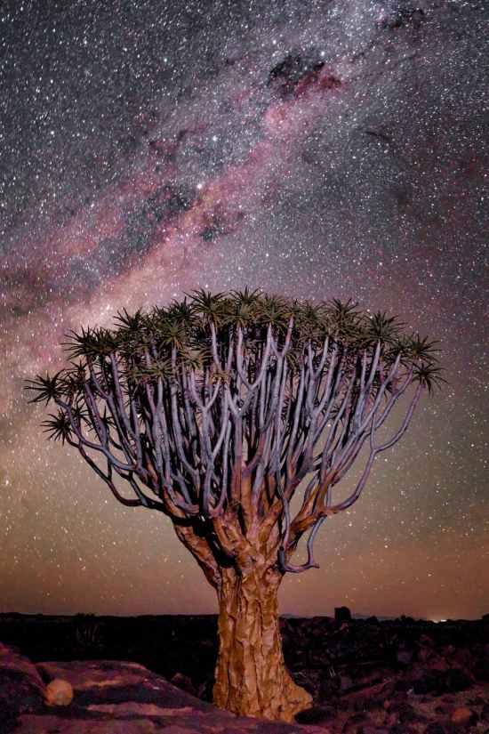 tree under starry sky