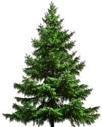 c tree