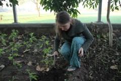 Gartenarbeit │ gardening
