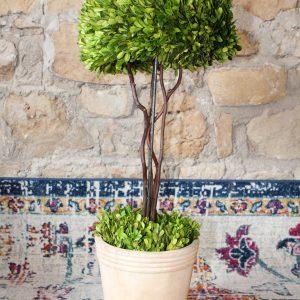 Single boxwood topiary in a ceramic pot Impressive Windows & Interiors Hastings MN