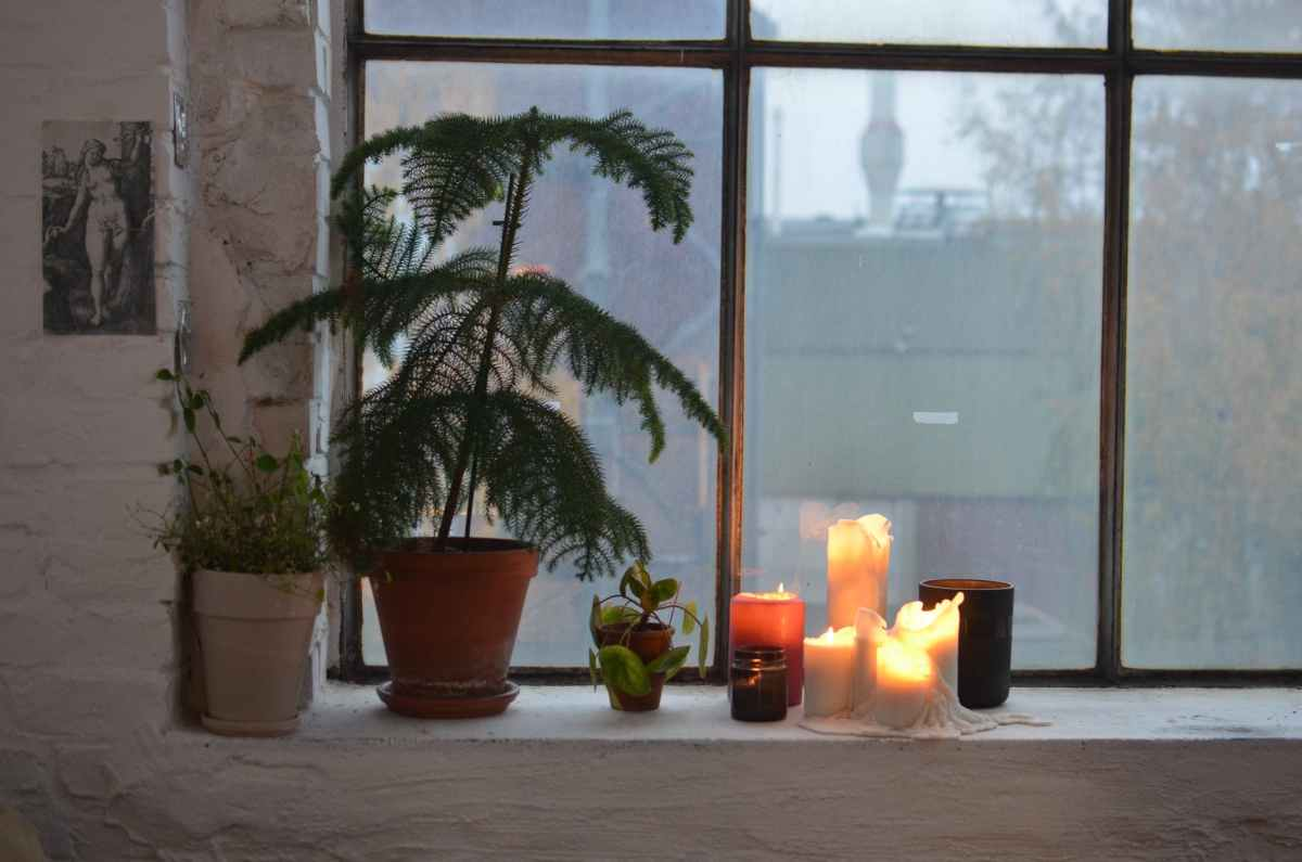 assorted plants and wax candles on windowsill at home