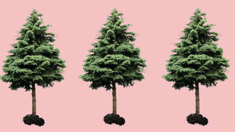 Evergreen Content Can (and Should) be a Moneymaker