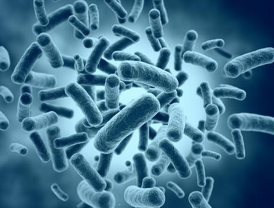 腸内細菌の中でも善玉菌が腸管免疫の活性化に深く関与している