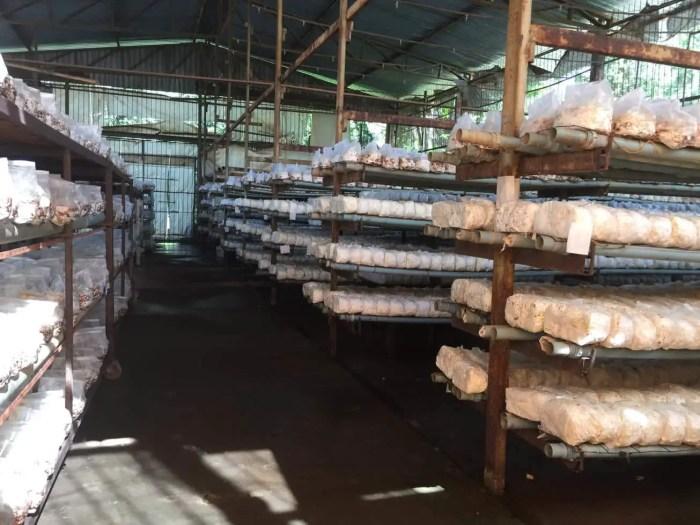 Mushroom farm in Brazil.