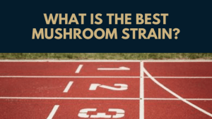What is the best mushroom strain?