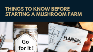 Things to know before starting a mushroom farm