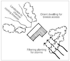 Plant trees and shrubs to funnel breezes