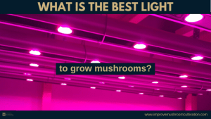 what is the best light to grow mushrooms