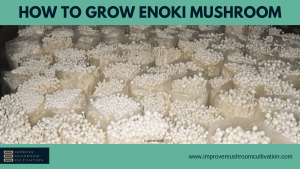 How to Grow Enoko Mushrooms