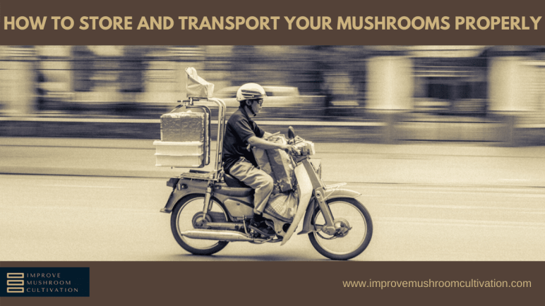 How to store and transport mushrooms properly