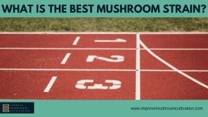 What is the best mushroom strain?