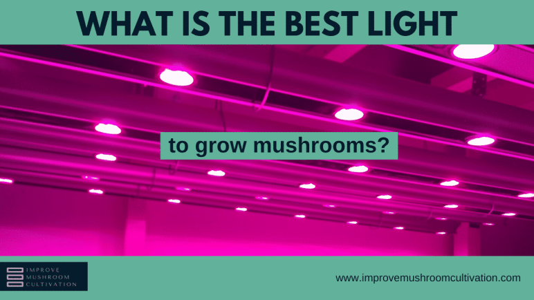 How light will impact your mushroom yield