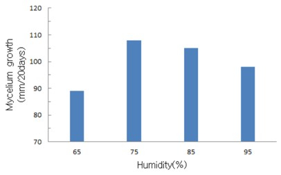 The effects of culture room humidity on mycelium growth of Flammulina velutipes