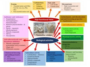 The graphical abstract of the nutritional values and biological activities of F. velutipes