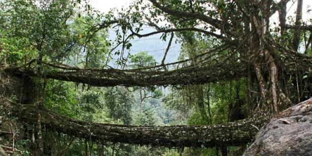 most u indiji
