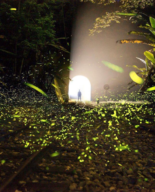 賞螢火蟲景點