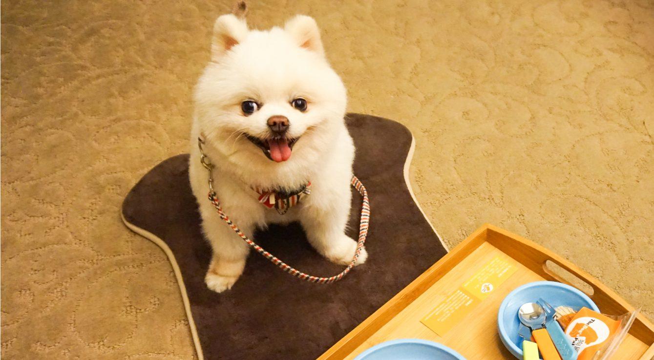 【 全台住宿 】全台精選「寵物飯店」安心帶寵物出遊! - ReadyGo
