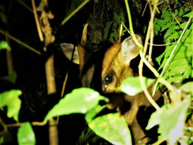 台東知本林道夜間生態探索