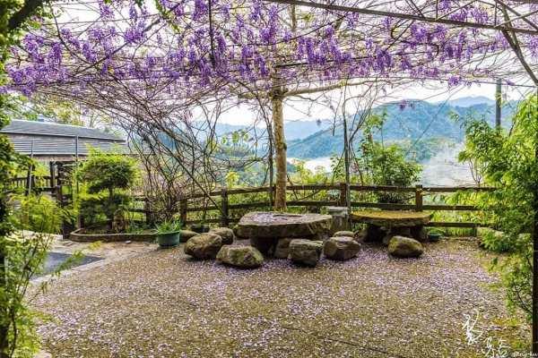 2020嘉義瑞里紫藤花季
