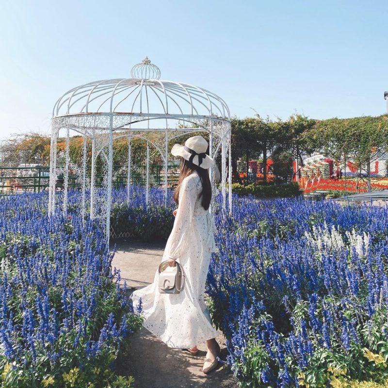 台中中社觀光花市每到花季時期便吸引許多遊客前往賞花